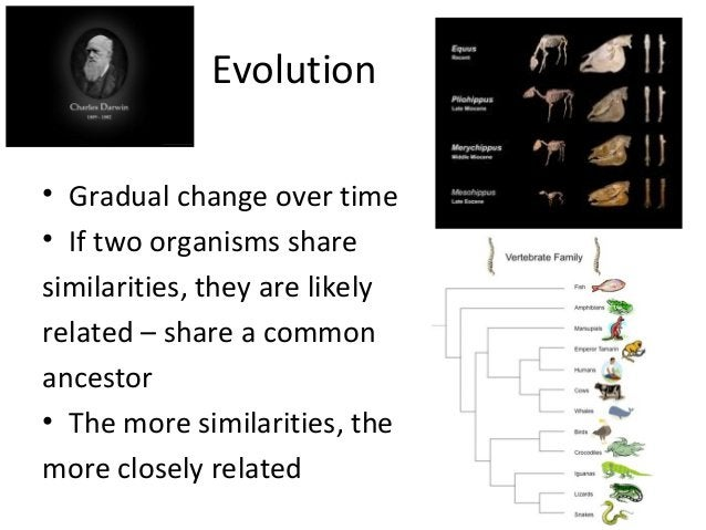 Evolution• Gradual change over time• If two organisms sharesimilarities, they are likelyrelated – share a commonancestor• ...