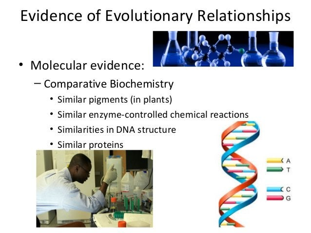 Evidence of Evolutionary Relationships• Molecular evidence:– Comparative Biochemistry• Similar pigments (in plants)• Simil...