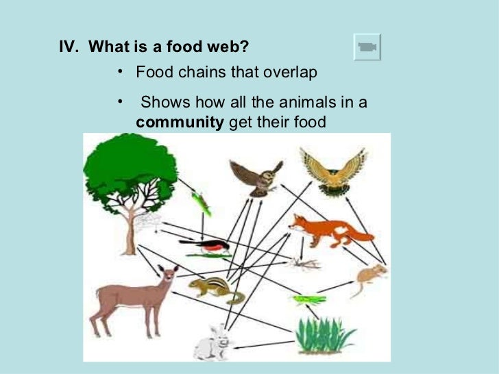 food and relationships Let's explore the various tools biologists use to study and monitor the movement  of matter and energy in an ecosystem food chains, food webs, and ecological.