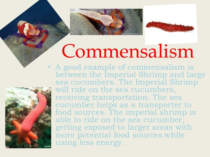 examples of commensalism relationship with pictures