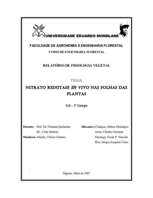 UNIVERSIDADE EDUARDO MONDLANE FACULDADE DE AGRONOMIA E ENGENHARIA FLORESTAL CURSO DE ENGENHARIA FLORESTAL  RELATÓRIO DE FI...