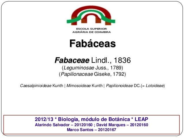 Fabáceas Fabaceae Lindl., 1836 (Leguminosae Juss., 1789) (Papilionaceae Giseke, 1792) Caesalpinioideae Kunth | Mimosoideae...