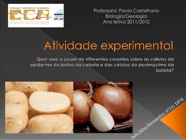 Professora: Paula Castelhano     Biologia/Geologia    Ano letivo 2011/2012