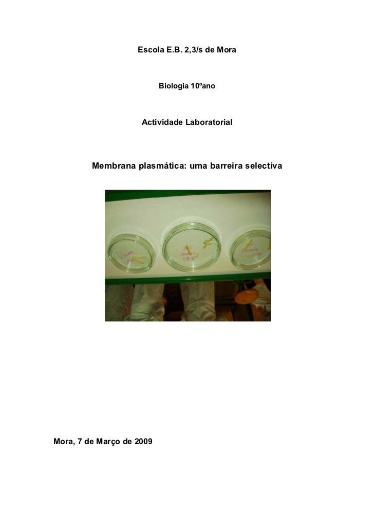 Escola E.B. 2,3/s de Mora                           Biologia 10ºano                     Actividade Laboratorial         Me...