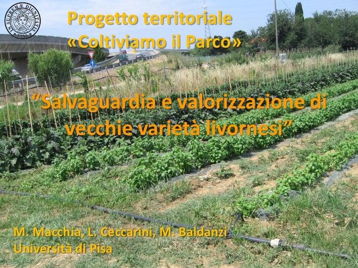 """Progetto territoriale         «Coltiviamo il Parco»   """"Salvaguardia e valorizzazione di       vecchie varietà livornesi""""M...."""