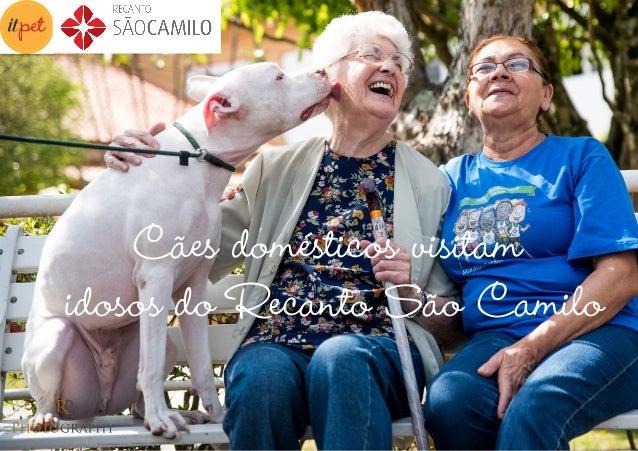 Cães domésticos visitam idosos do Recanto São Camilo