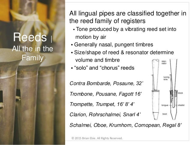 All lingual pipes are classified together in the reed family of registers • Tone produced by a vibrating reed set into mot...