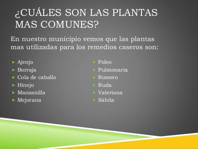 plantas mas comunes
