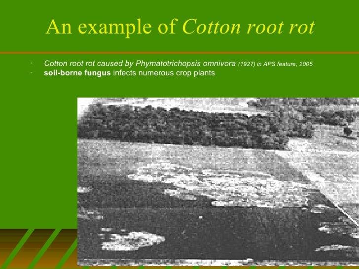 Remote sensing agriculture Slide 3