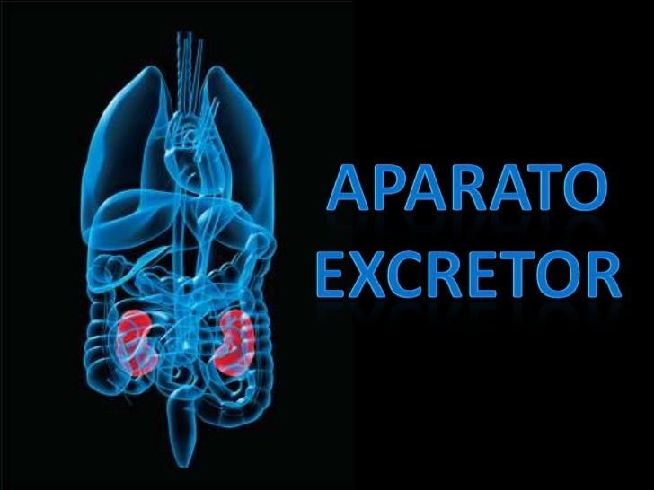 APARATO <br />Excretor<br />