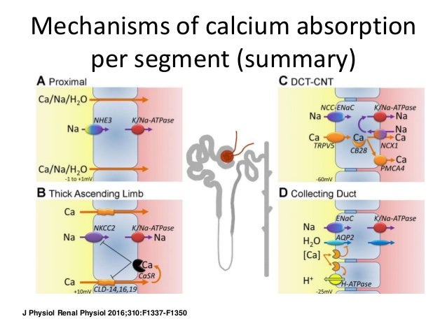 Osteoporosis and Calcium