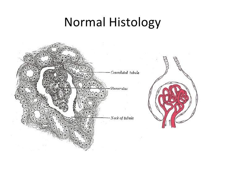 Normal Biopsy by Lynne Reid