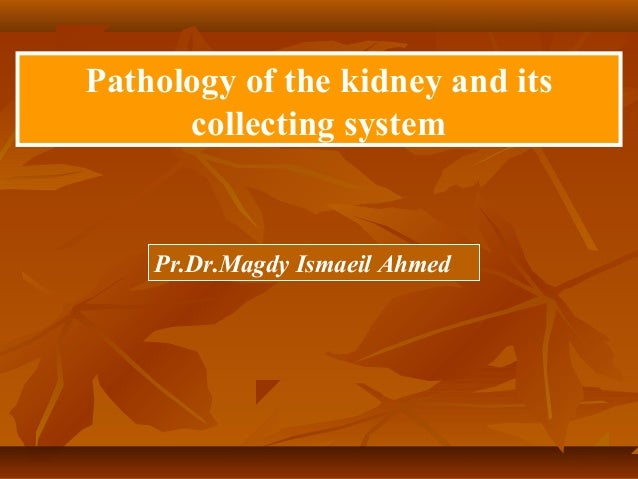 Pathology of the kidney and itscollecting systemPr.Dr.Magdy Ismaeil Ahmed