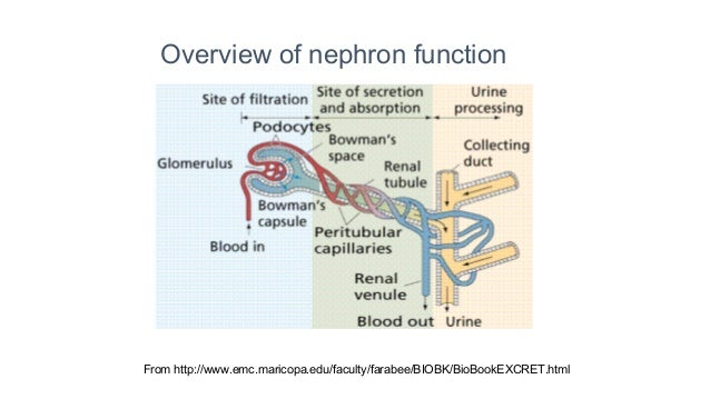 Reproductive physiology lecture 6 physiology of pregnancy ppt.