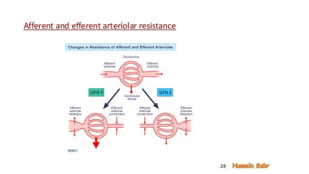 Renal physiology, renal blood flow, autoregulation, golmerular filtra…