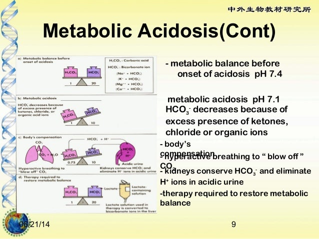 renal regulation of metabolic acidosis and alkalosis, Skeleton