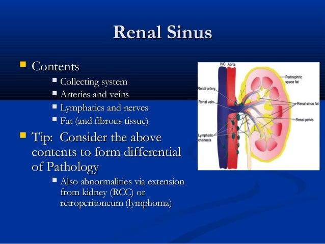 Renal Sinus