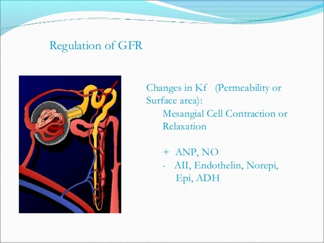 Freely Filtered Not Metabolized Not Reabsorbed Does Not Change GFR Not Secreted Not Produced Measurement of GFR (Inulin M....