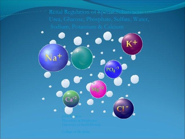 Reabsorption of Glucose in the Proximal Tubule LumenBasal Membrane Na+ K+ Glucose Glucose Na+ SGL T1 GL UT2