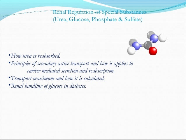 Glu Sodium Powered Secondary Active Transport Na+ Na+ LumenCell Membrane Stanley J. Nazian, Ph..D., This slide was stolen ...