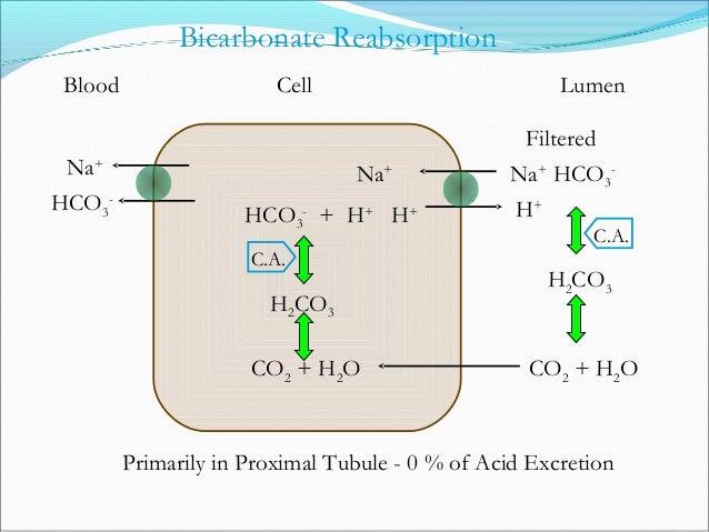 CO2 + H2O H2CO3 HCO3 - + H+ Ammonium Excretion C.A. H+ + NH3 Primarily in Distal Tubule & CD - 66 % of Acid Excretion NH4 ...