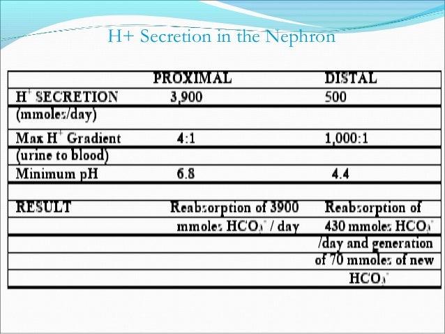 Renal Responses to a Metabolic Acidosis • Decreased filtered bicarbonate • Increased H+ secretion • Increased NH3 producti...
