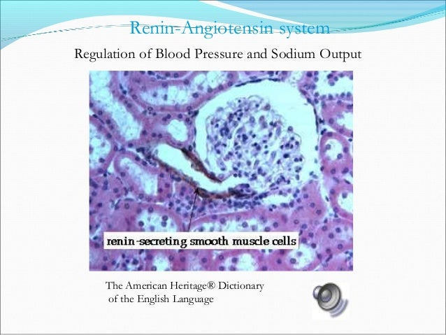 ↓ Blood Pressure ↑ Renin (Kidney) ↑ Angiotensin I ↑ Angiotensin II Angiotensinogen (Liver) Angiotensin Converting Enzyme (...