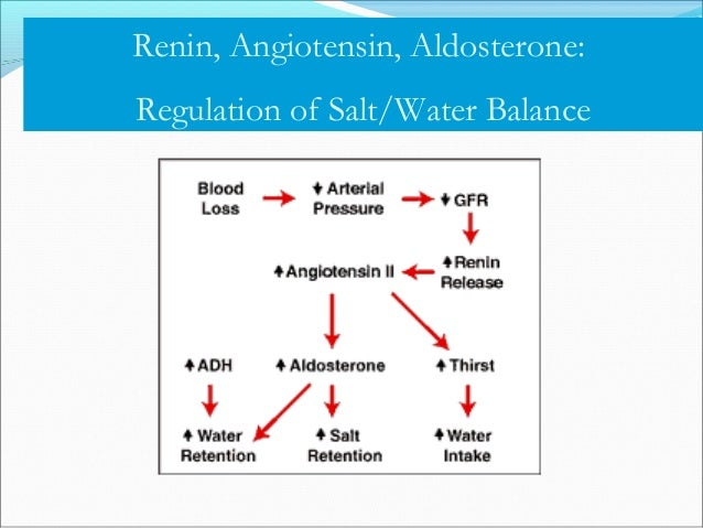 Aldosterone Secreted by the adrenal glands in response to angiotensin II or high potassium Acts in distal nephron to inc...