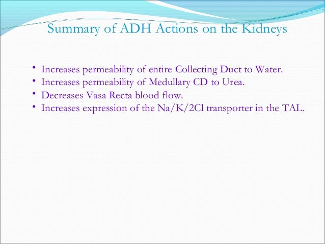 Renal autoregulationRenal autoregulation  Enables the kidney to maintain solute and water regulationEnables the kidney to...