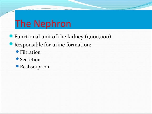 The Nephron Functional unit of the kidney (1,000,000) Responsible for urine formation: Filtration Secretion Reabsorpt...