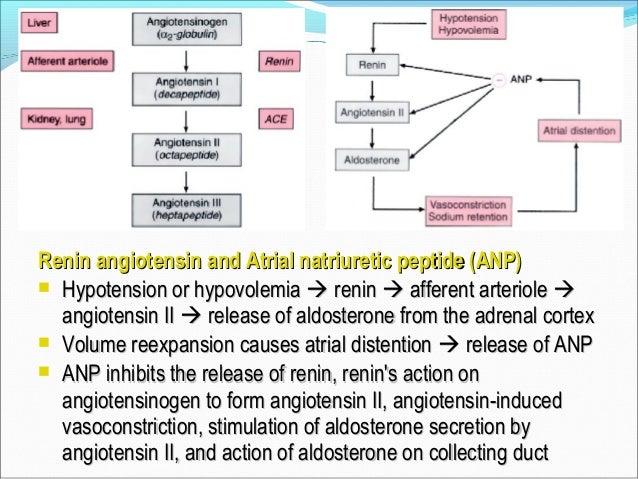 Autoregulation impaired inAutoregulation impaired in  Severe sepsisSevere sepsis  ARFARF  During cardiopulmonary bypass...
