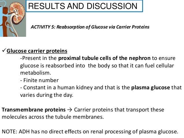 Renal system physiology physioex