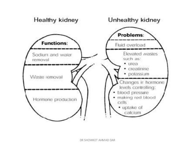 Pathophysiological Changes In Ckd Patients For Anaesthetic