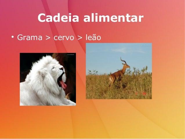 Cadeia alimentar  Grama > cervo > leão