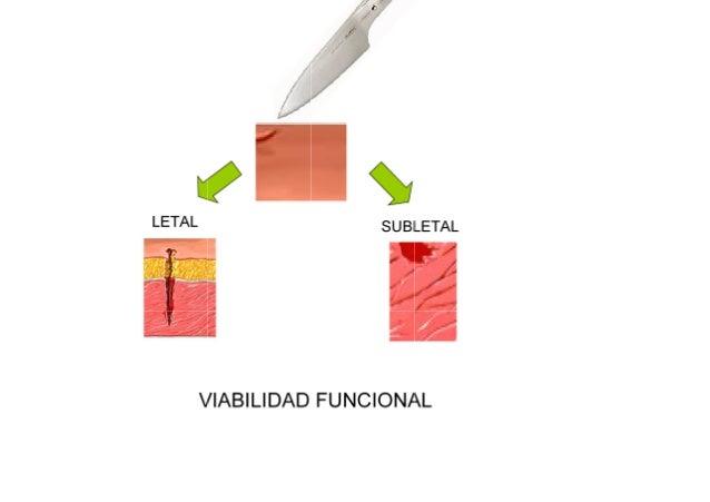 Reparación célular Slide 2