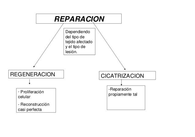 Reparación célular Slide 3