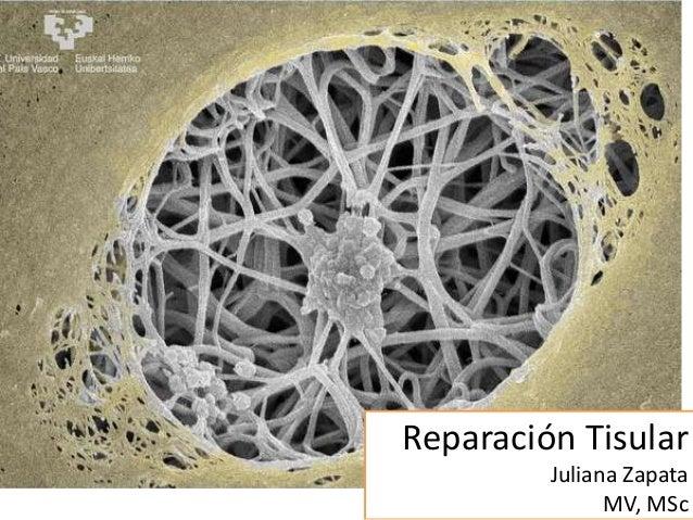 Reparación Tisular Juliana Zapata MV, MSc