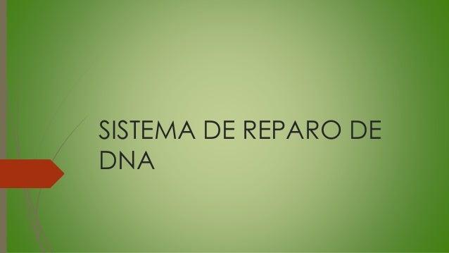 SISTEMA DE REPARO DE DNA