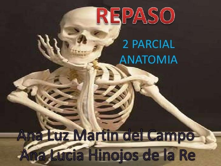REPASO ANATOMIA