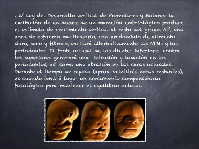 . 2/ Ley del Desarrollo vertical de Premolares y Molares: la excitación de un diente de un mamelón embriológico produce el...