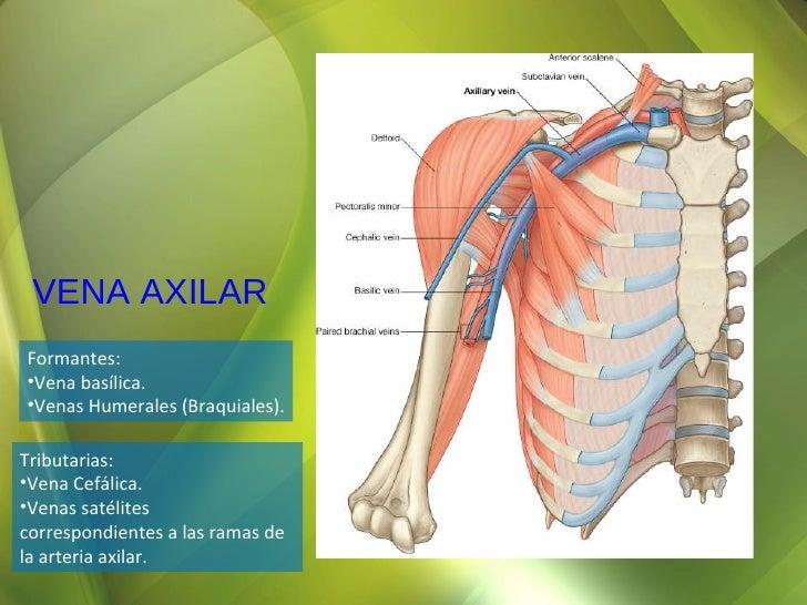 Repaso Anatomia Grupo Atlas Osteologia Hombro y Axila