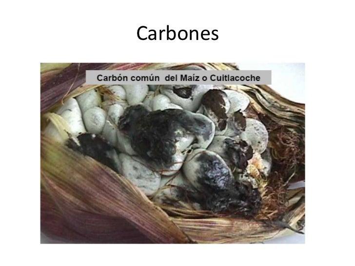 Carbones<br />