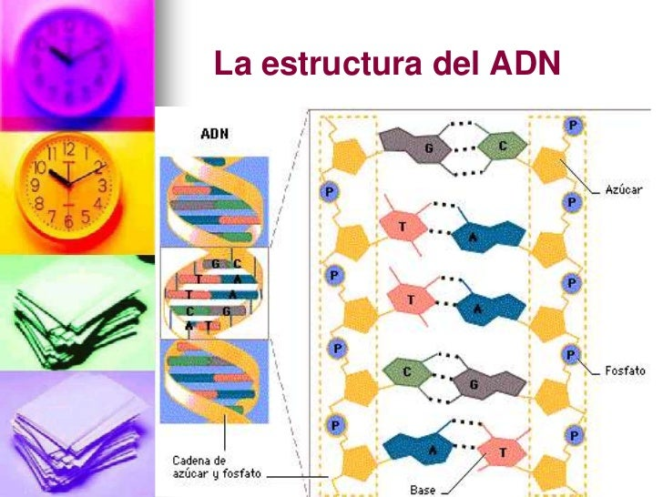 maqueta adn facil apexwallpapers pets world