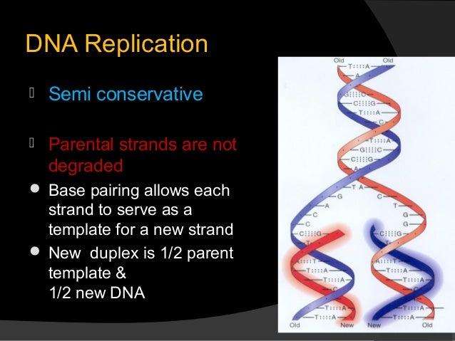Dna replication 6 638gcb1368623422 6 dna replication semi conservative pronofoot35fo Choice Image