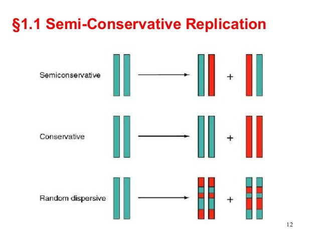 semi conservative replication of dna The semi conservative model of dna replication is a simple and elegant way of making copies of the dna as we knoe that the two strands of dna are complementary to.