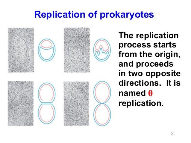 Dna Replication In Eukaryotes And Prokaryotes