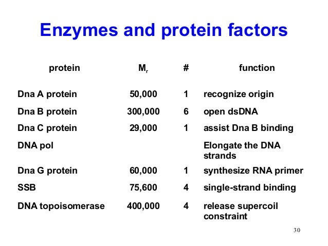 purpose of protein synthesis