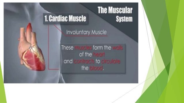 5 TYPES OF MUSCLE MOVEMENT: