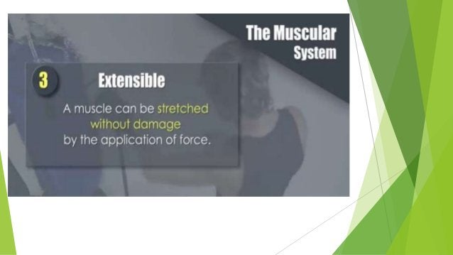 Disorders and Other Conditions of Muscle tissue