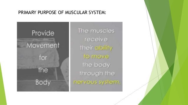 PRIMARY PURPOSE OF MUSCULAR SYSTEM: